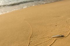 Small single transparent fish washed ashore on a golden sand bea Royalty Free Stock Image