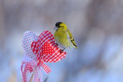 Small siskin sits on a heart for Valentine`s Day with soft dawn. Small eurasian siskin Spinus spinus sits on a heart for Valentine`s Day with soft dawn Royalty Free Stock Images