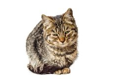 A small sitting cat with a sad look stock photo