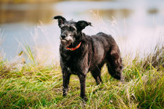 Small Size Black Dog in grass near river, lake Royalty Free Stock Photography