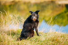 Small Size Black Dog in grass near river, lake. Summer Stock Photo