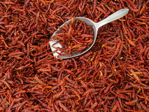 Small size dried chilly. With scoop top view Royalty Free Stock Photo