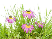 Small slice of a meadow Stock Images