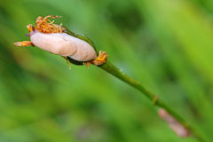 Small slugs crawling on flower petal in the green meadow Royalty Free Stock Photos