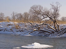 Small small river in the winter Stock Photography