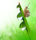 Small Snail. On dewy grass Stock Photography