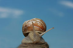 Small snail. A little land snail in a macro shot stock image