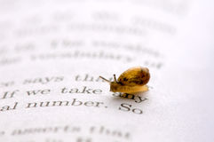 Small snail Stock Photos
