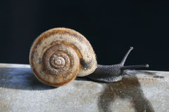Small snail. Snail with prickly shell stock photography