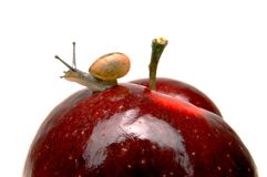 Small snail on apple Royalty Free Stock Photo