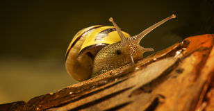 Small snail on a broken pottery piece Royalty Free Stock Images