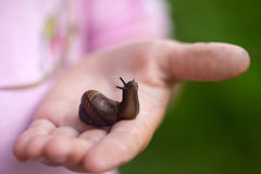 Small snail on child hand Stock Photo