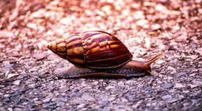 Small snail climb alone on the middle road in the morning with beautiful sunlight background. Little snail climb alone on the middle road with sunlight,lonely stock photo