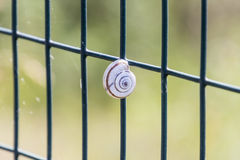 Small snail clinging to the network. A small snail clinging to the network Stock Photos