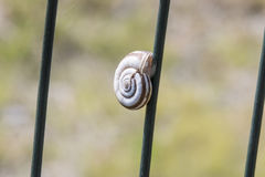 Small snail clinging to the network. A small snail clinging to the network Royalty Free Stock Image