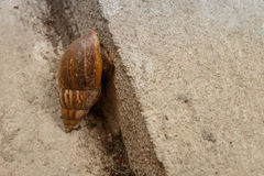 Small snail Royalty Free Stock Photos