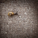 Small snail crawls on a canvas Stock Photography
