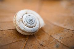 The small snail in the garden. In the nature royalty free stock photos