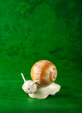 Small snail, green background Stock Photos