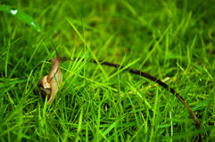 Small snail in green grass Stock Photos