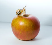 Small snail on a red apple Stock Image