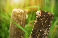 Small snail resting in the meadow Stock Photos