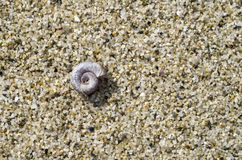 Small snail shell in the sand on the beach Stock Photography