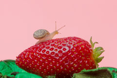 Small snail on strawberry Royalty Free Stock Images