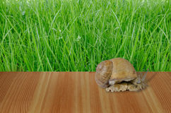 A small snail on a wooden board. With Green grass  texture background Royalty Free Stock Photos