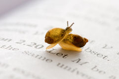 Small snails Royalty Free Stock Photography