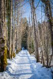 Small snowy road with tree avenue on sunny winter day. Small snow covered road with nice tree avenue on a sunny winter day in Styria, Austria royalty free stock image