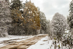 Small snowy road in winter forest. Small country road in winter with sunshine on trees royalty free stock photos