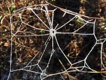 Spider net with frost, Lithuania stock image