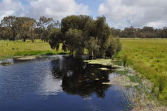 Small soak in paddock with paperbark trees Royalty Free Stock Image
