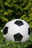 Small soccer ball. Soccer ball in a grass Royalty Free Stock Photo
