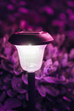 Small Solar Garden Light, Lantern In Flower Bed. Garden Design. Royalty Free Stock Photography