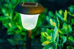 Small Solar Garden Light, Lantern In Flower Bed. Garden Design. Royalty Free Stock Photo