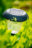 Small Solar Garden Light, Lantern In Flower Bed Stock Photos