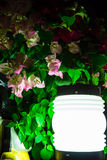 Small Solar Garden Light with Pink Flowers, Pattaya, Thailand. Royalty Free Stock Photos