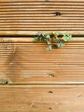 Small space. Small bush growing between two wooden plates Stock Images