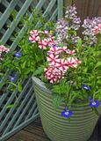 Small space garden potted flowers and plants Royalty Free Stock Images