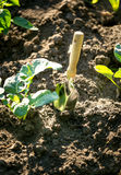 Small spade with wooden handle stuck in the garden bed Stock Photos
