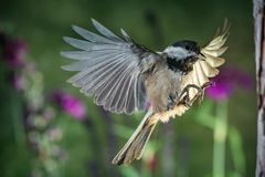 Small but spectacular. The very small bird could be spectacular if viewing from a closer distance stock photo