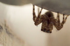 Small Spider Royalty Free Stock Images