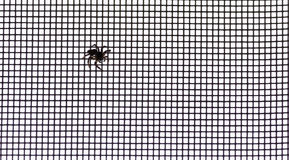 A Small Spider Captured the Net Window in a Tall Modern Building. In Yamaguchi Prefecture Royalty Free Stock Photo