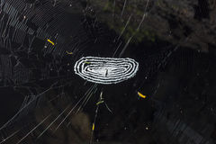 Small spider in the center of a spider web Royalty Free Stock Photos
