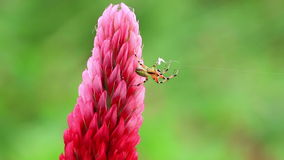 Small spider stock footage