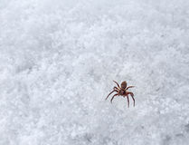 Small spider on frosty surface Royalty Free Stock Photos