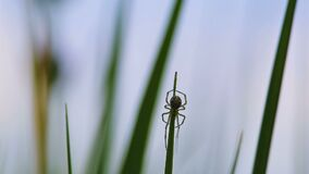 Small spider on the grass.  stock footage