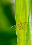 Small spider on the grass Stock Photos